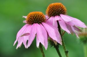 Blomsterstemning fra haven